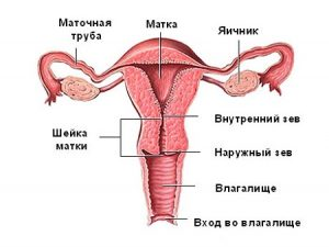 Матка после родов - сокращение, восстановление, упражнения